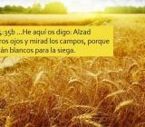 Reunión de coordinación - Grupos vitales (Iglesia en Padre las Casas - Chile)